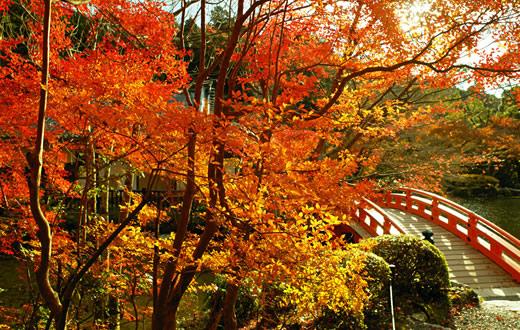 関西紅葉・穴場・ライトアップ【京都・大阪・兵庫・滋賀・奈良・和歌山】